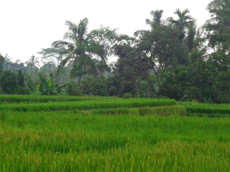 Tanah di Ubud Bali dijual