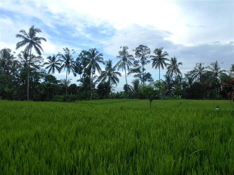 jual properti di tanah Ubud