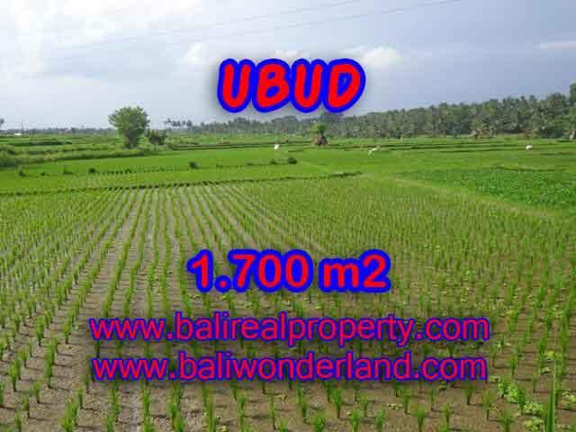 INVESTASI PROPERTI DI BALI - JUAL TANAH DI UBUD CUMA RP 1.500.000 / M2