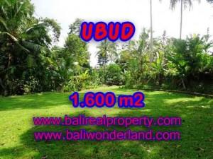 DIJUAL TANAH di UBUD BALI Untuk INVESTASI TJUB416