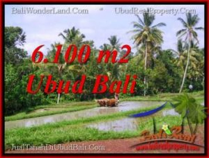 TANAH di UBUD BALI DIJUAL MURAH 6,100 m2 View Sawah lingkungan villa