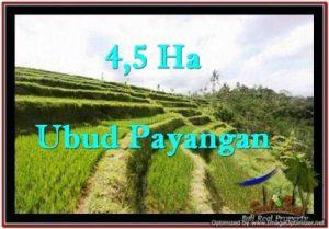 TANAH di UBUD BALI DIJUAL MURAH 450 Are di Ubud Payangan