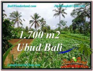 JUAL MURAH TANAH di UBUD 1,700 m2 View kebun dan sawah