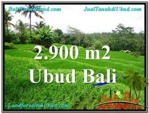 TANAH MURAH di UBUD BALI 2,900 m2 View sawah